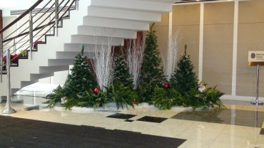 Plants Alive Plant Rental Specialists For Dc Md Va